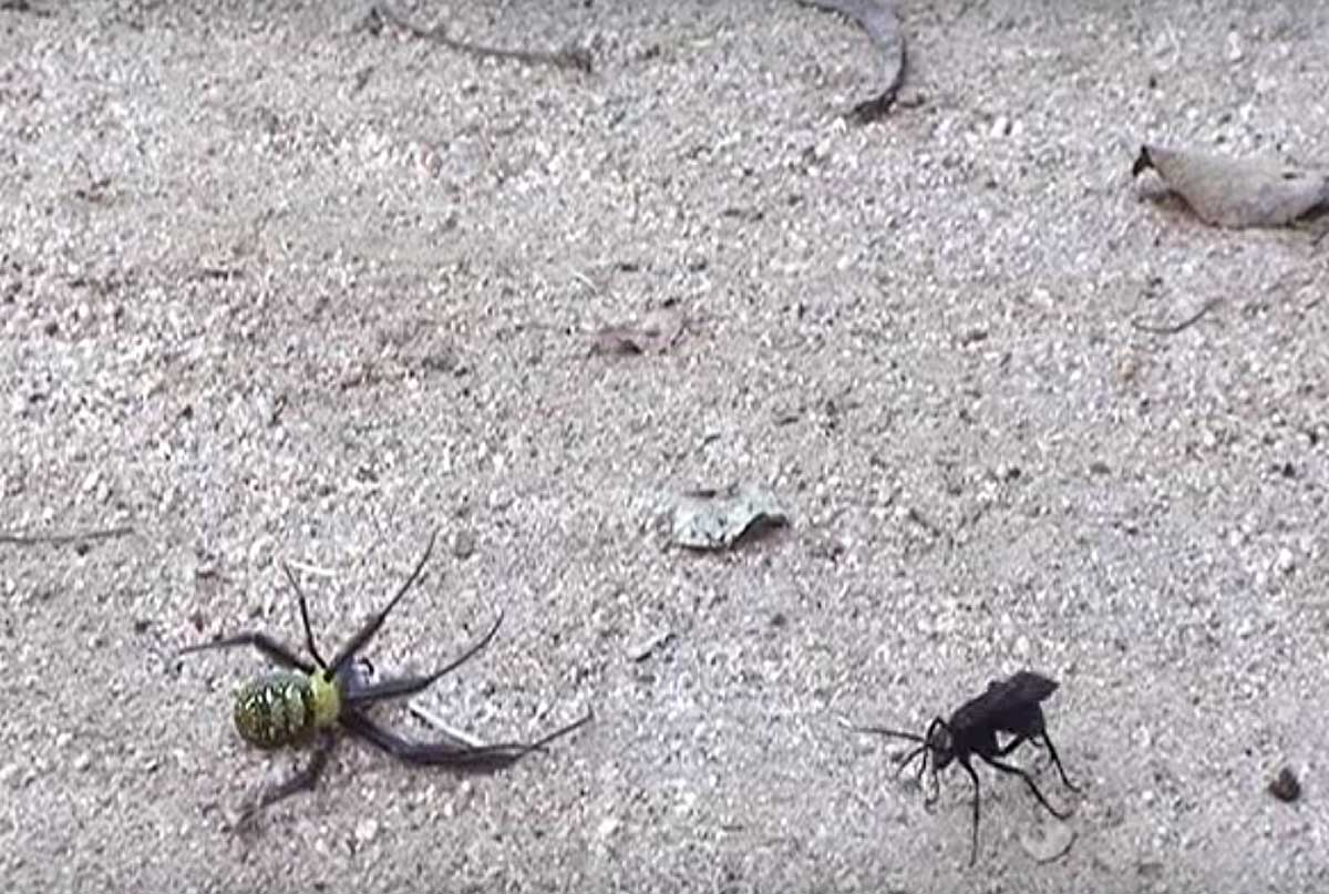 Small but Ruthless. 3 Ridiculously Psychopathic Insects to Spot on Safari.