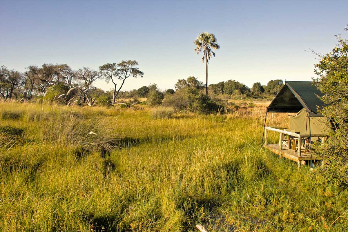 Oddballs in Okavango Delta