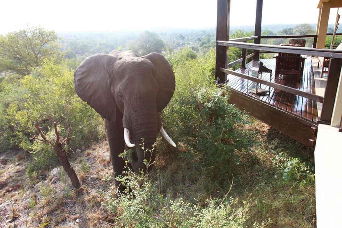 Makumu Elephant at Lodge