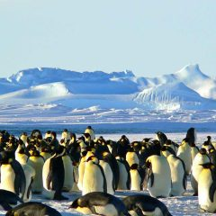 Head to the Polar Regions for New 12 Day Singita Antarctica Adventure