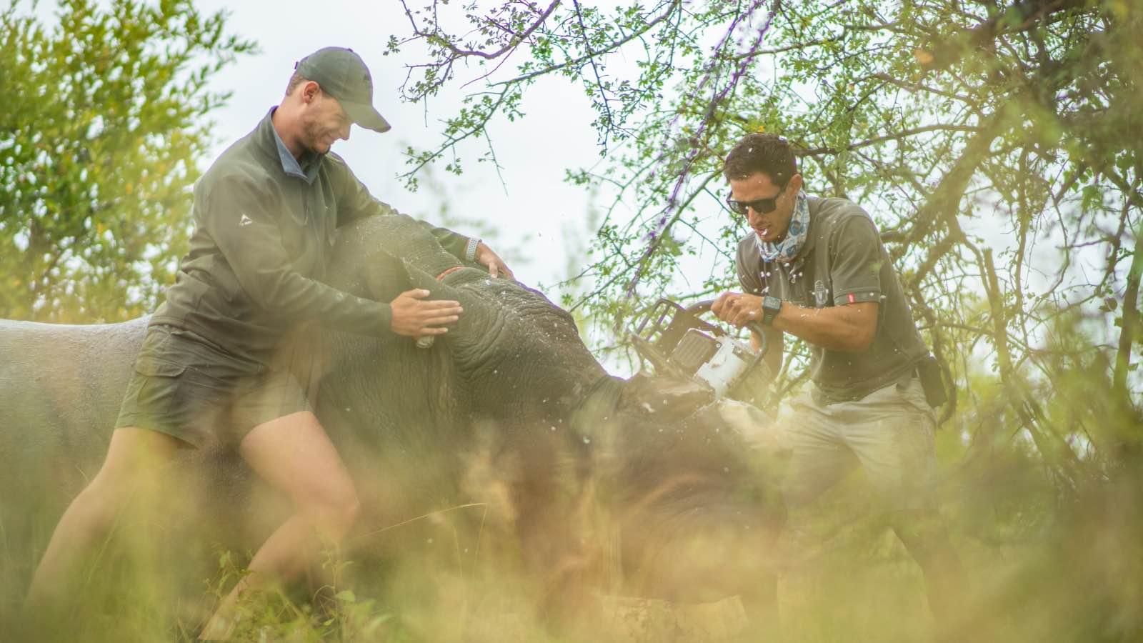 Balule rhino dehorning operation by Kevin MacLaughlin4