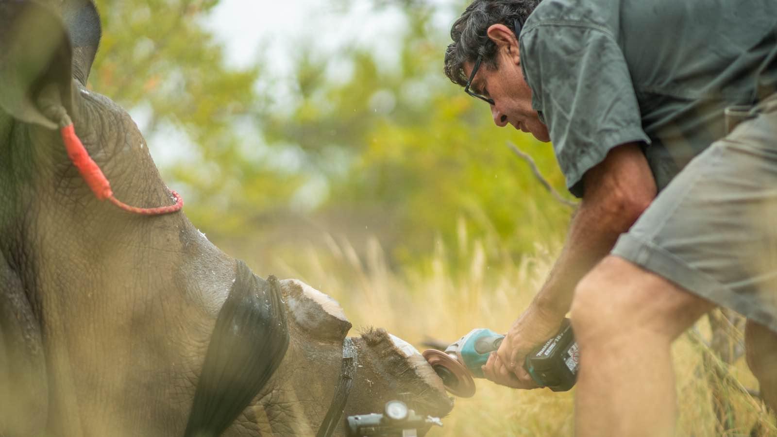 Balule rhino dehorning operation by Kevin MacLaughlin5