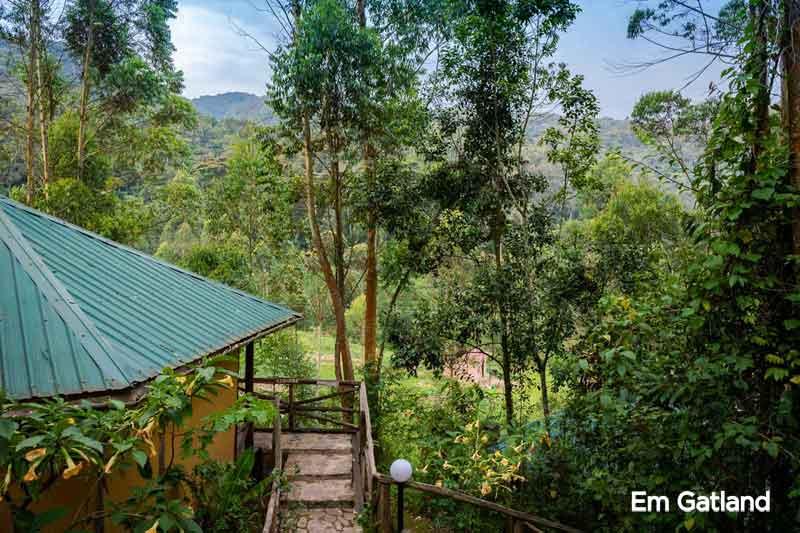 Gorilla Safari Lodge Forests