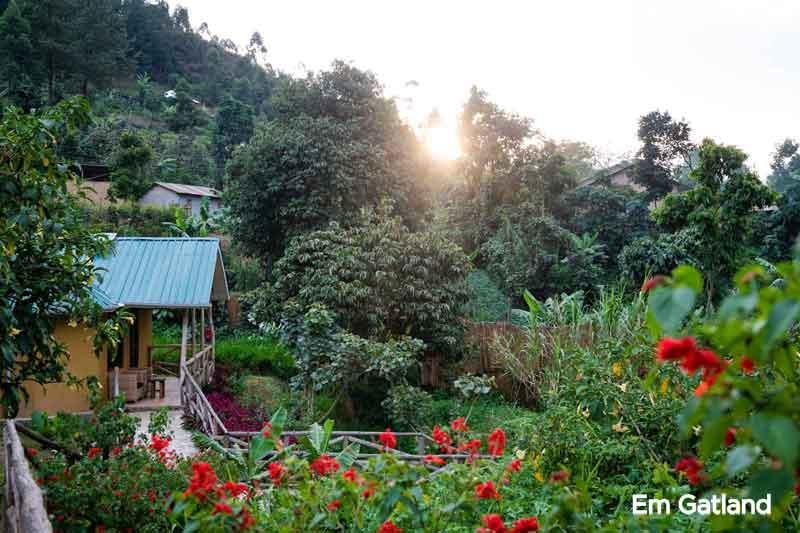 Gorilla Safari Lodge Grounds