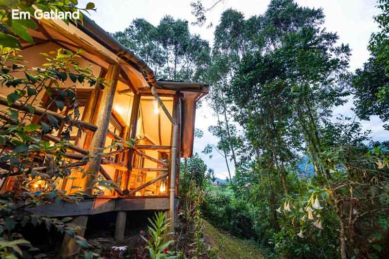 Gorilla Safari Lodge Room