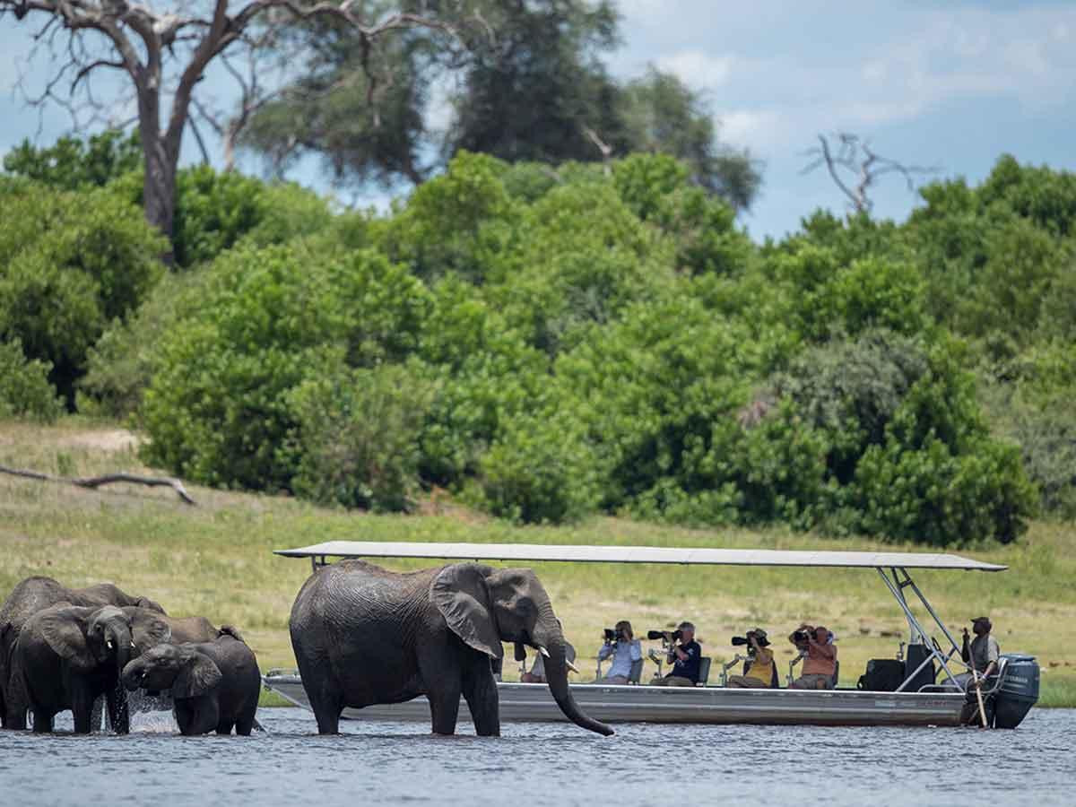Pangolin Chobe Boating