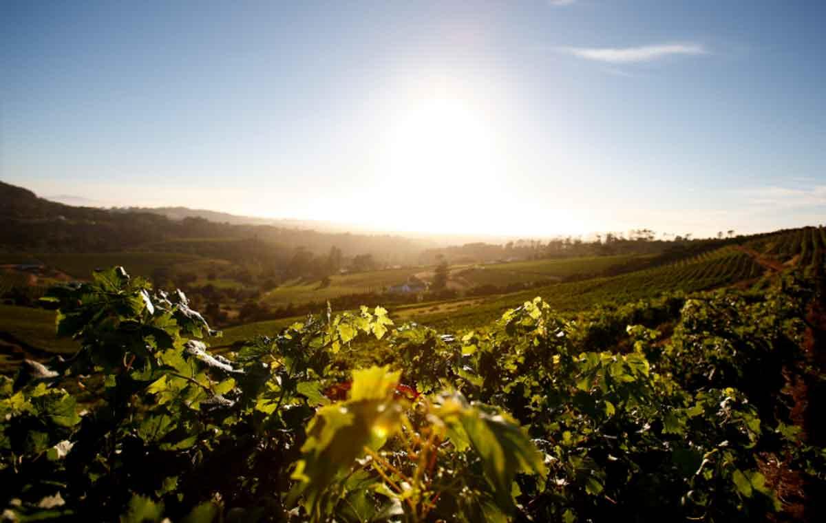 Wine Farm Weddings in Cape Town, My Top 4 Venues for Wine Farm Weddings in Cape Town