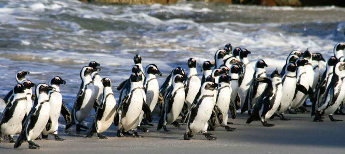 Boulders Beach for Family Activities in Cape Town