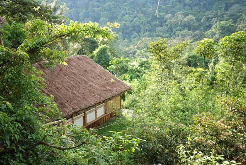 Buhoma Lodge in Bwindi Forest