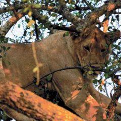 Client Feedback : Witnessing East Africa's Wildebeest Migration