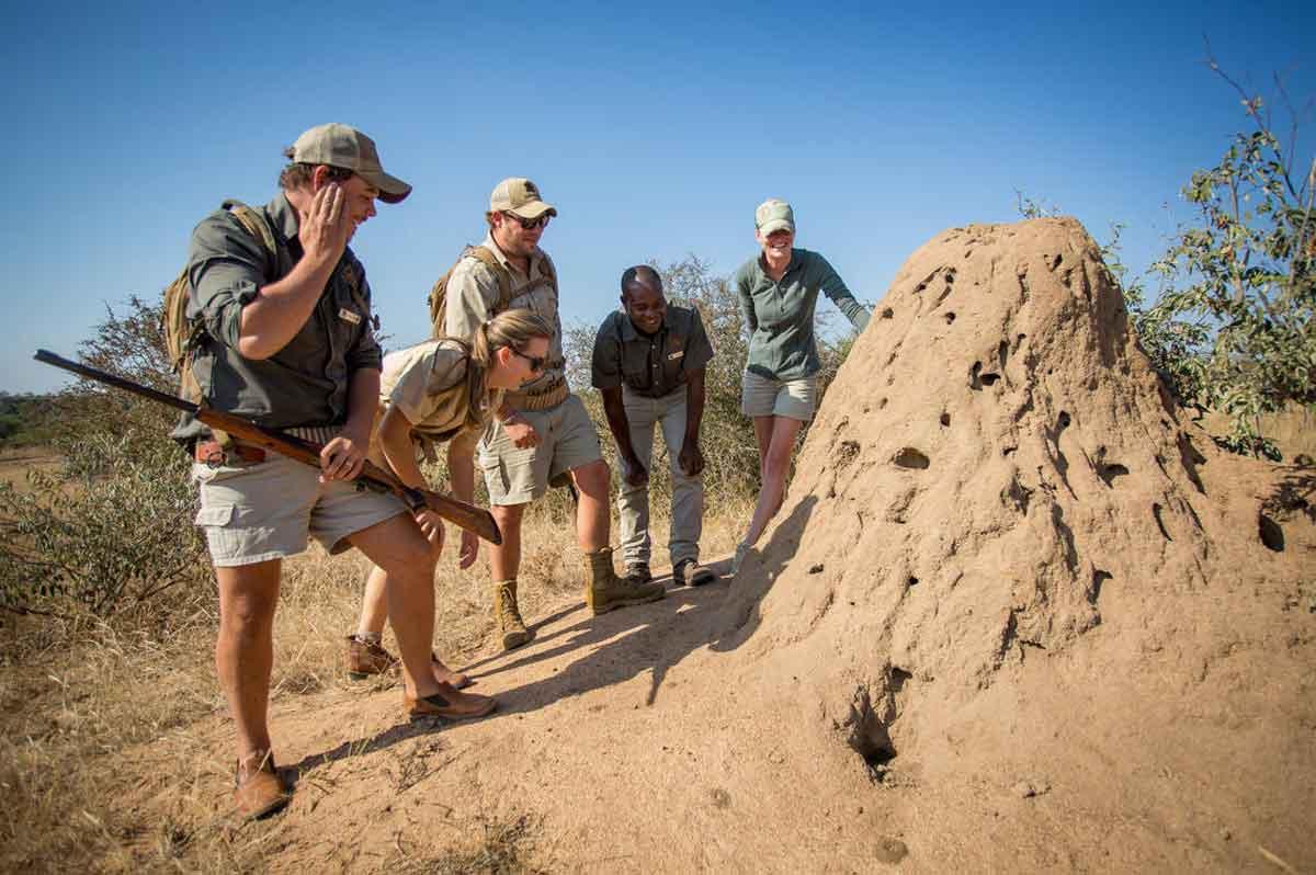 Bateleur Termite Mound