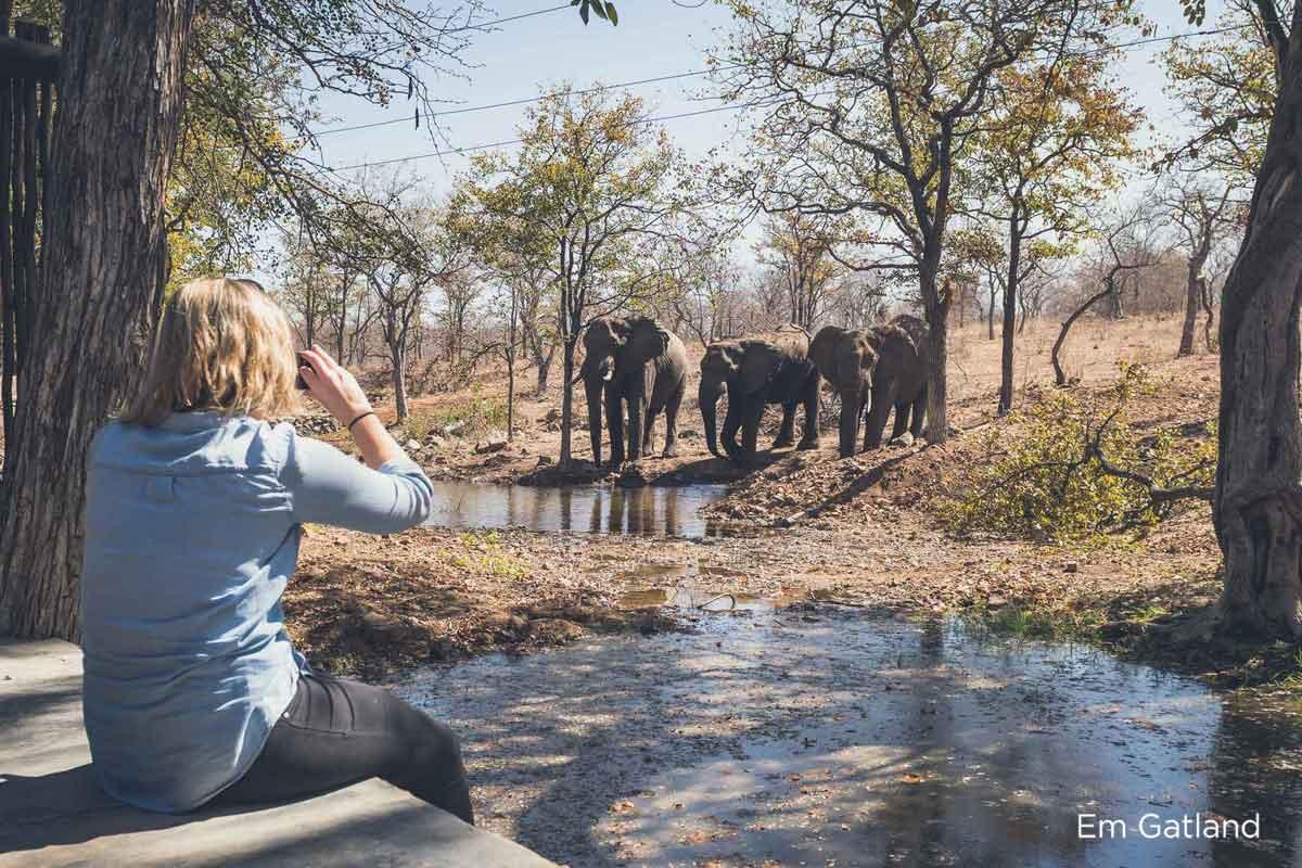 Elephants Visit Lodge