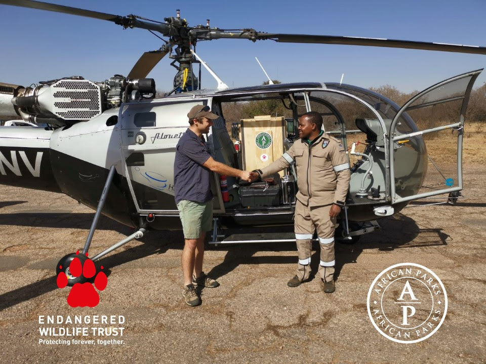African Parks, Endangered Wildlife Trust, and the Malawi Department of National Parks and Wildlife successfully translocate four cheetahs from South Africa to Majete Wildlife Reserve in Malawi