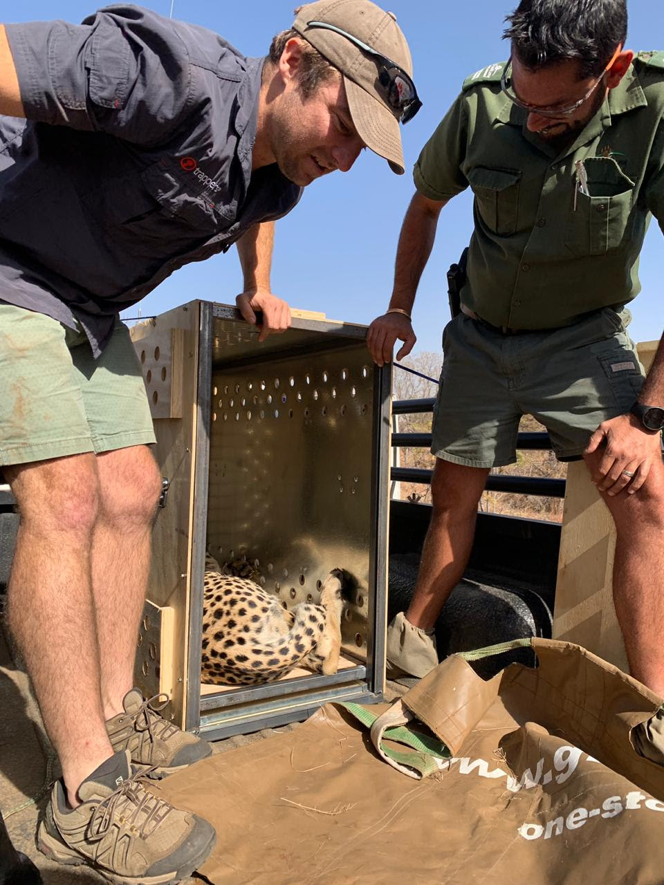 Malawi's cheetah population grows with reintroduction to Majete Reserve