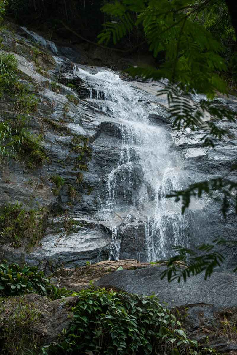 TijucaNational Park, Rio's TijucaNational Park: Explore the World's Largest Urban Forest