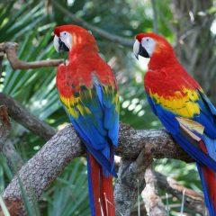 Birding in the Pantanal, Brazil : 6 Birds to Spot
