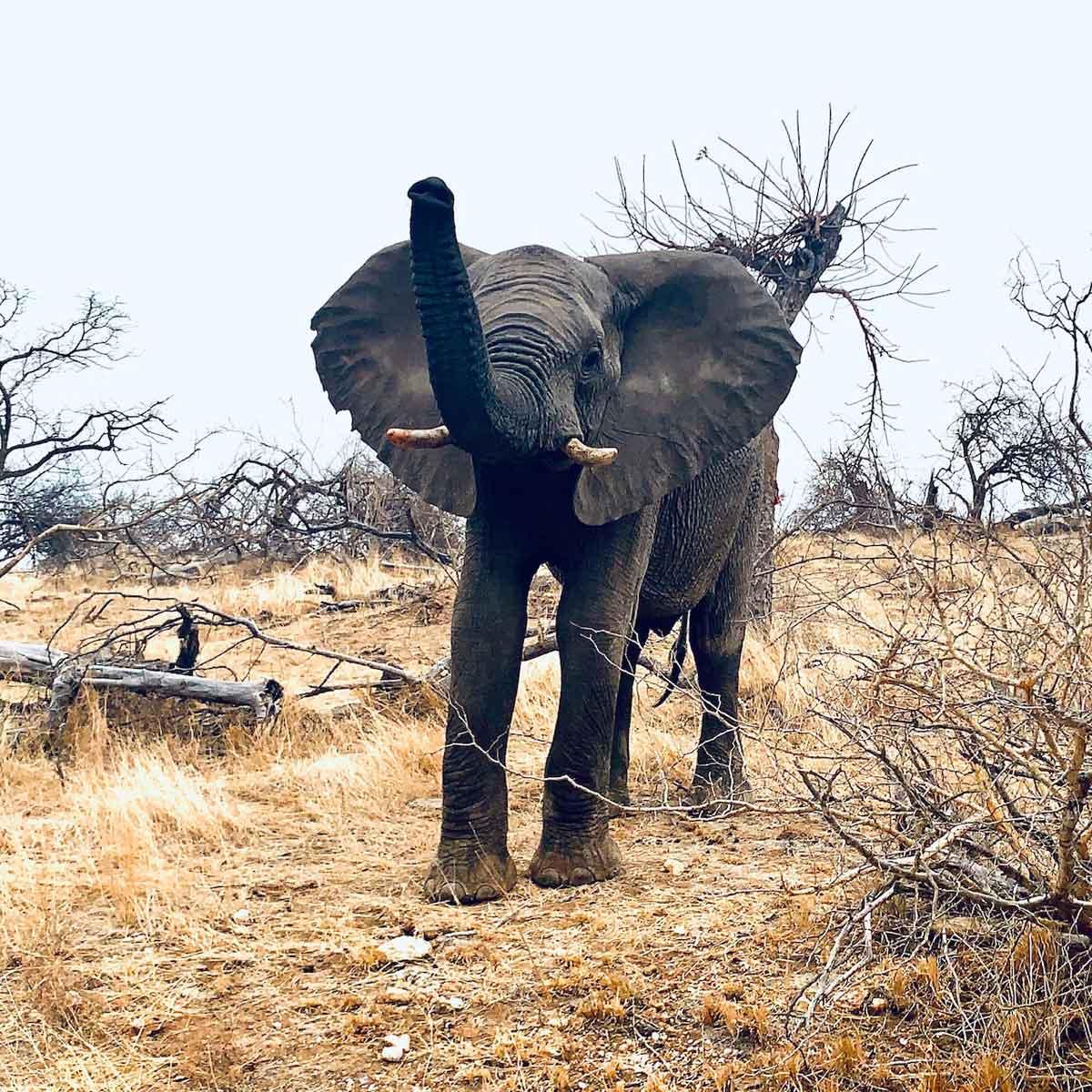 Spotting Elephants in Kruger
