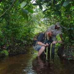 11 Night Guided Conservation Adventure in the Congo Basin