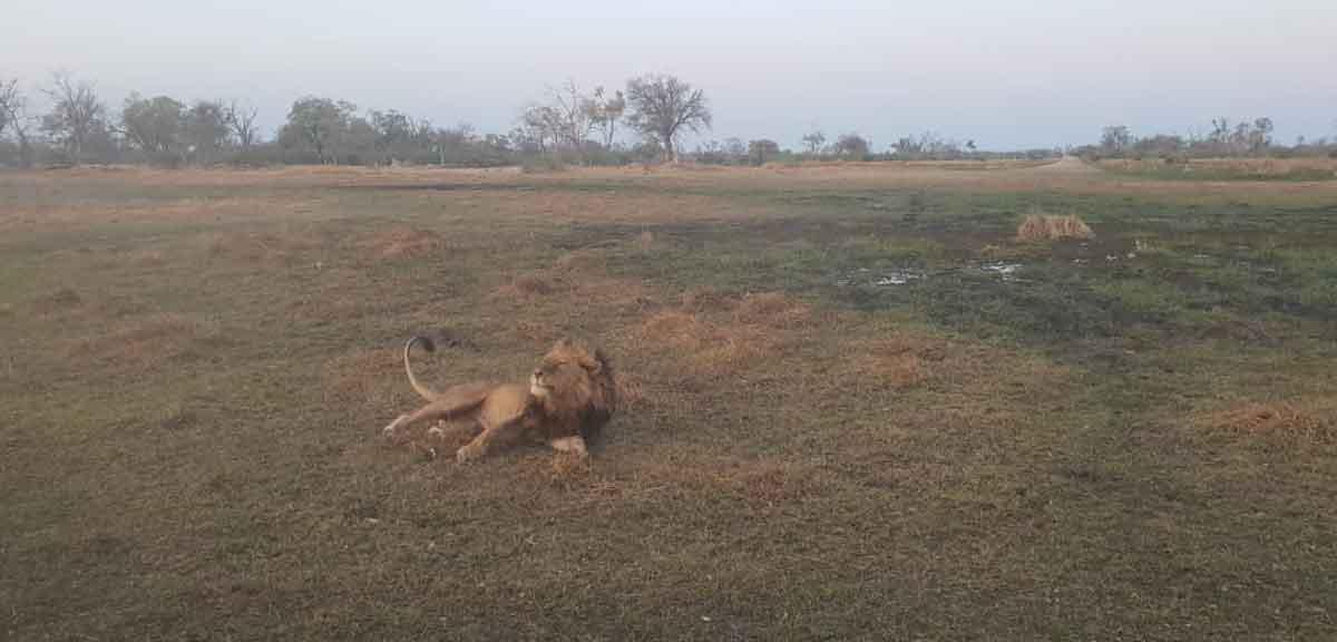 Seledi Camp Lions