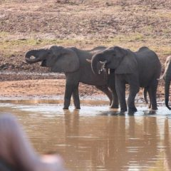 4 Good Reasons to Spend Christmas & New Year on Safari