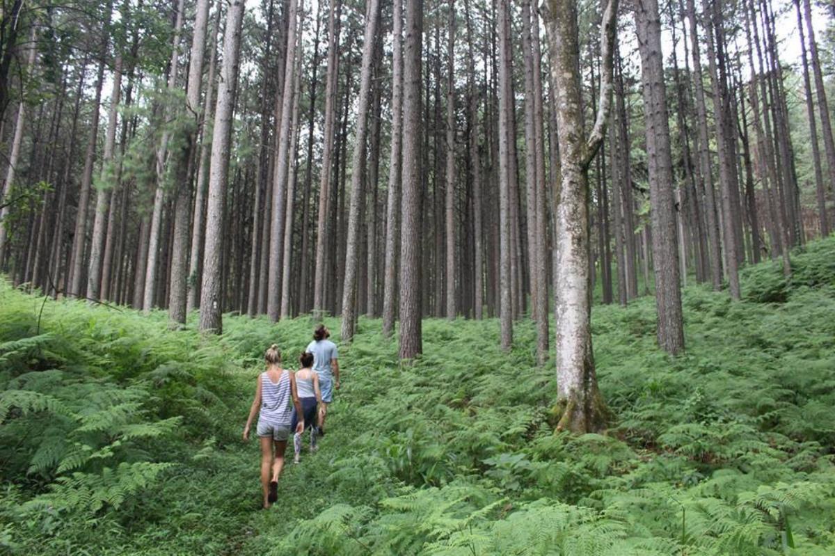 Forest walks Zwakala River Retreat
