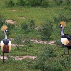 Birding destinations in Uganda & the birds you'll find there
