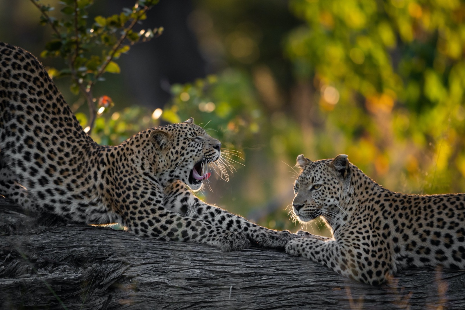 Best safari lodges in Botswana 2020 #SunSafarisSays