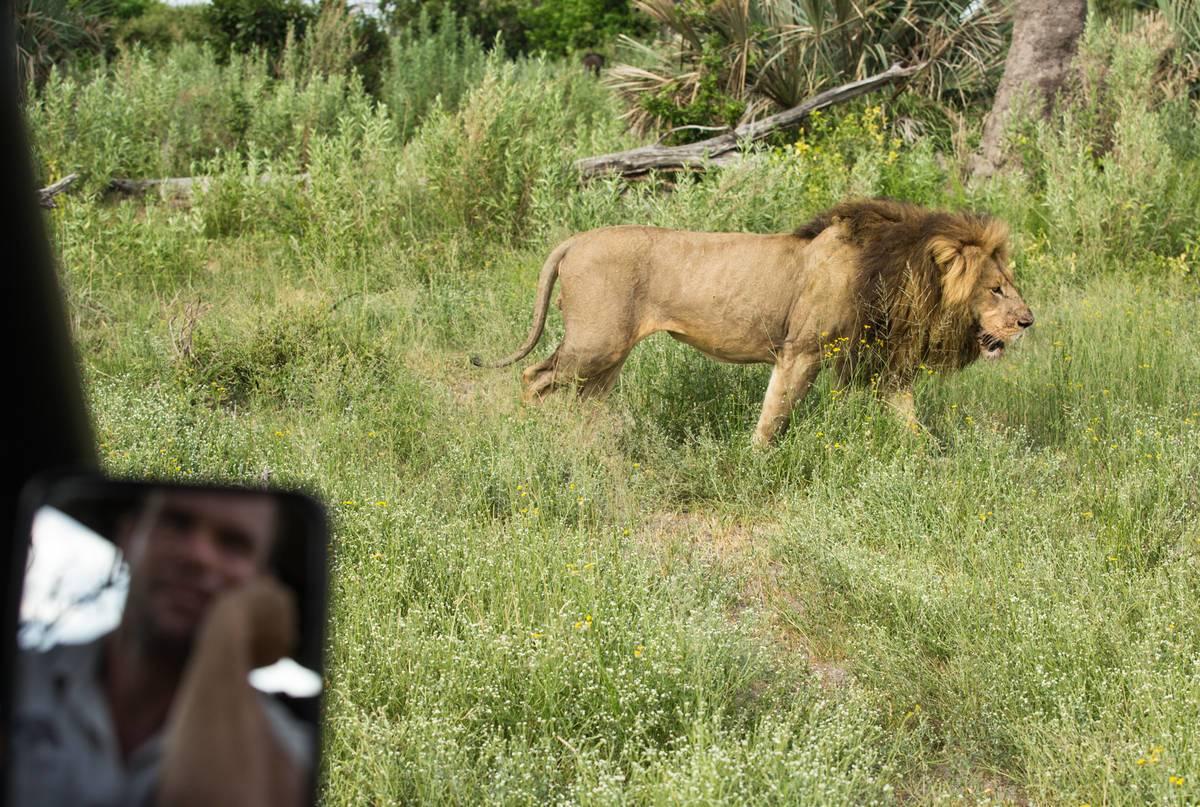 Gomoti Lions