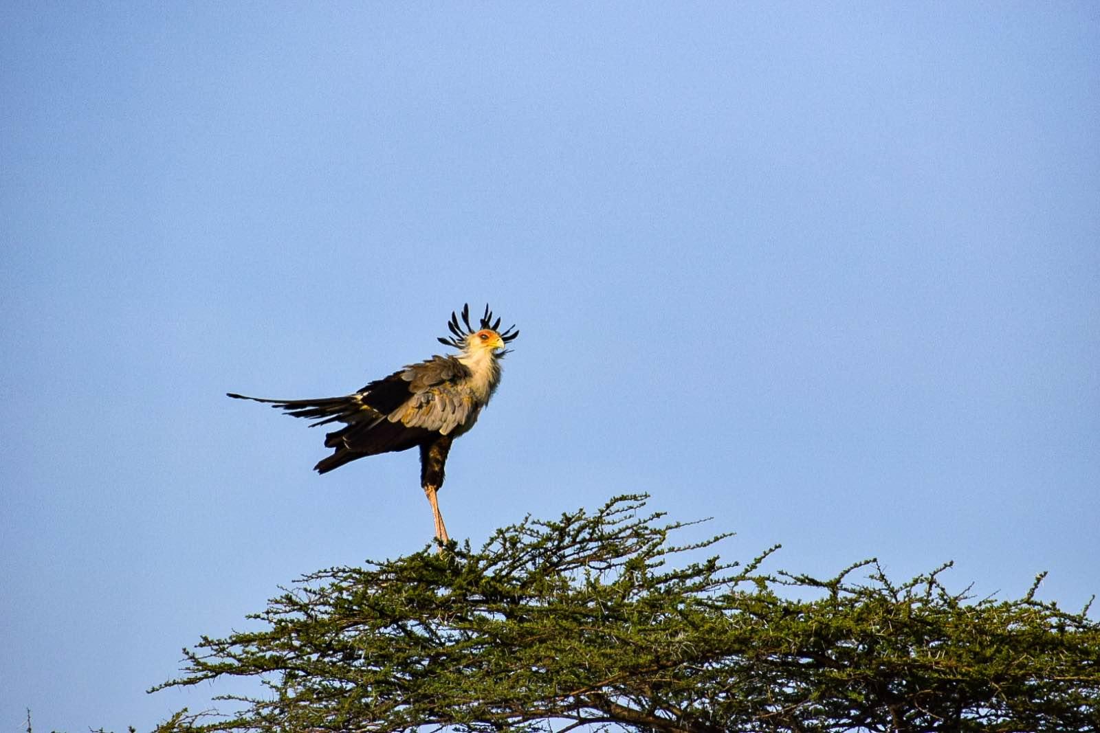 safari in Kenya, Insider info: Michelle's take on her safari in Kenya
