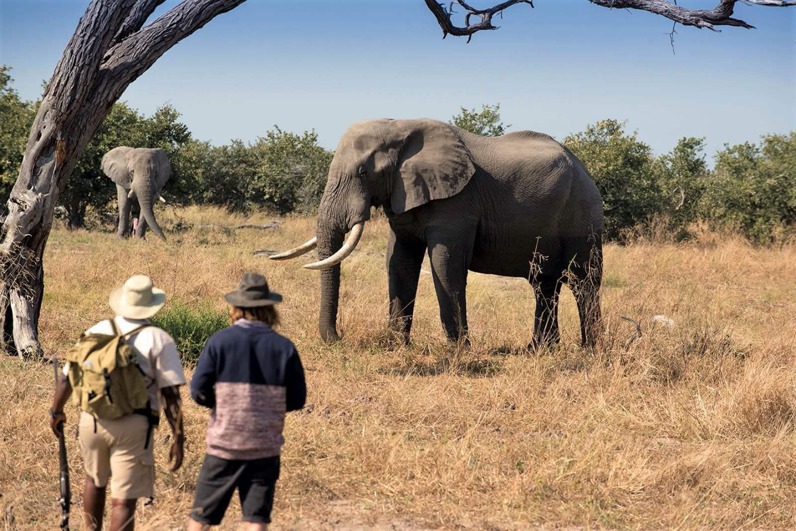 Best of Botswana, Explore the best bits of Botswana in 10 days