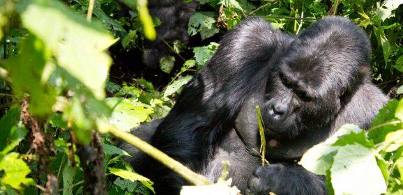 Michelle's amazing Uganda Safari experience.