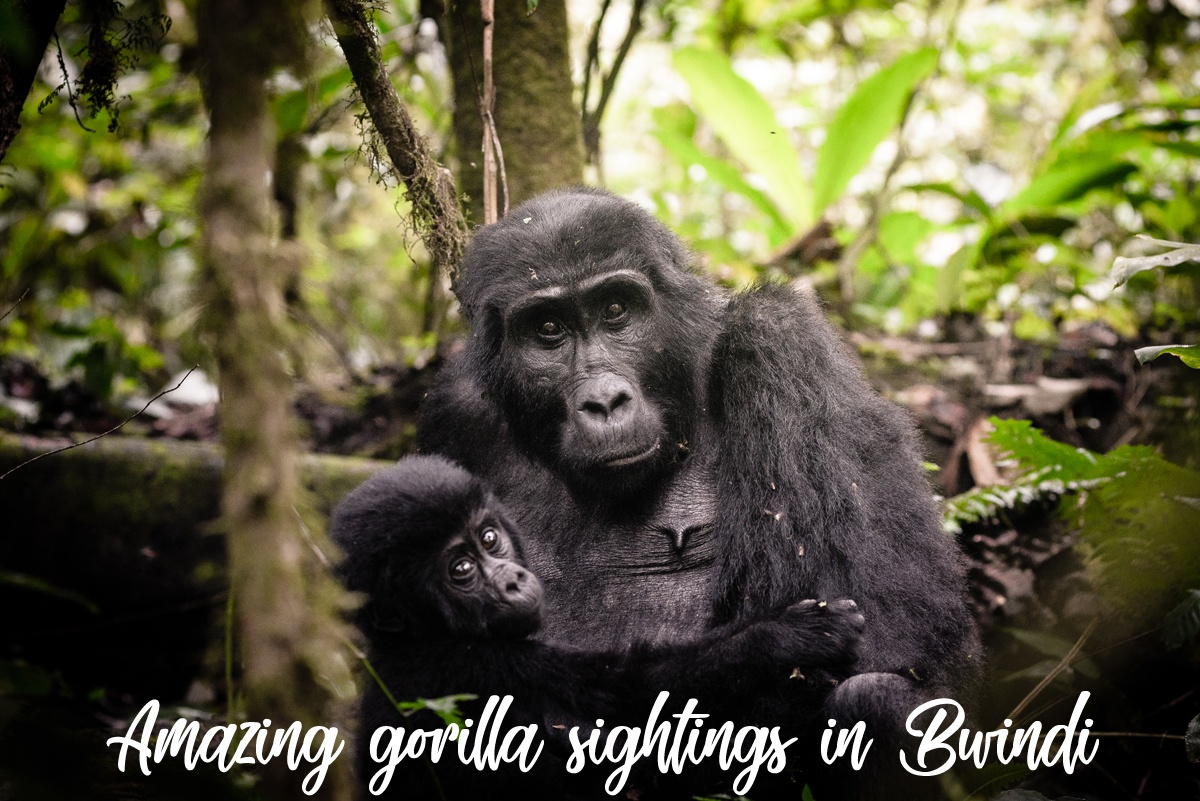 Uganda Safari Highlights, Uganda Safari highlights and tours