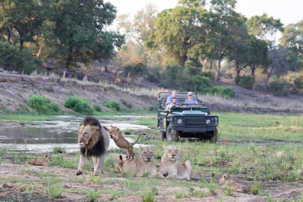 Kruger Park Accommodation Specials (