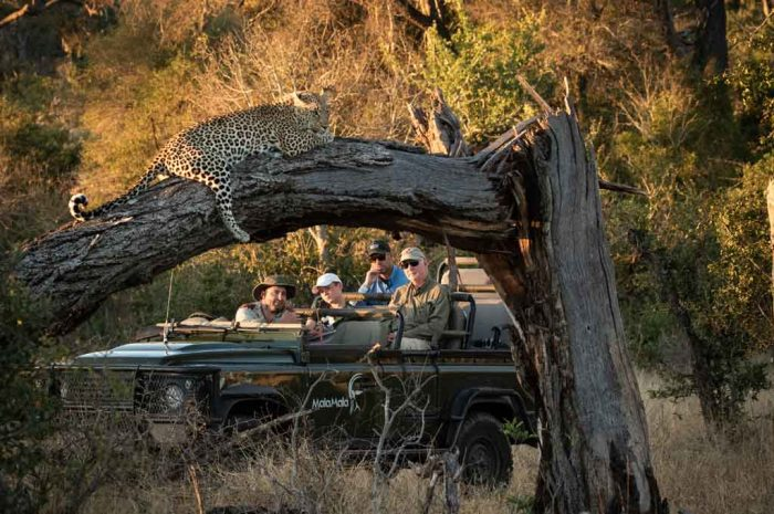 Kruger Park Accommodation Specials for 2021