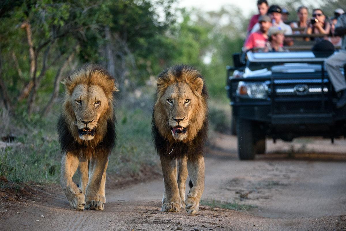 Kruger Park Accommodation Specials