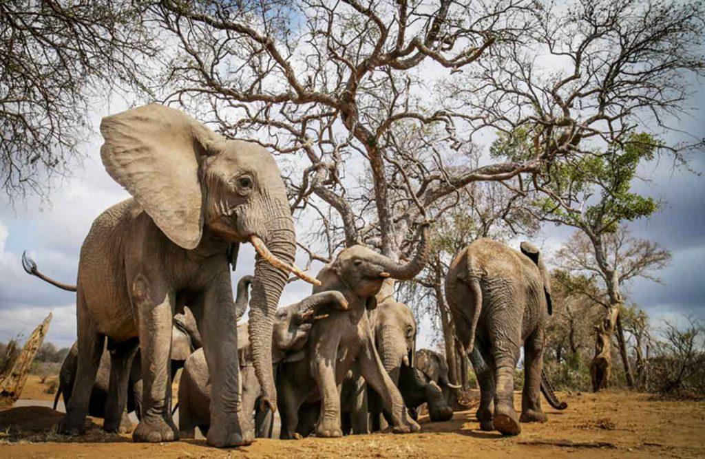 Kruger Park Accommodation Specials Jabulani Safari