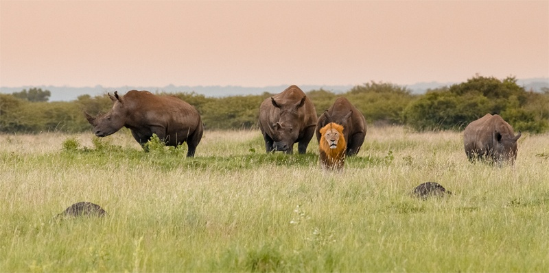Consider a South Africa Safari in 2021.