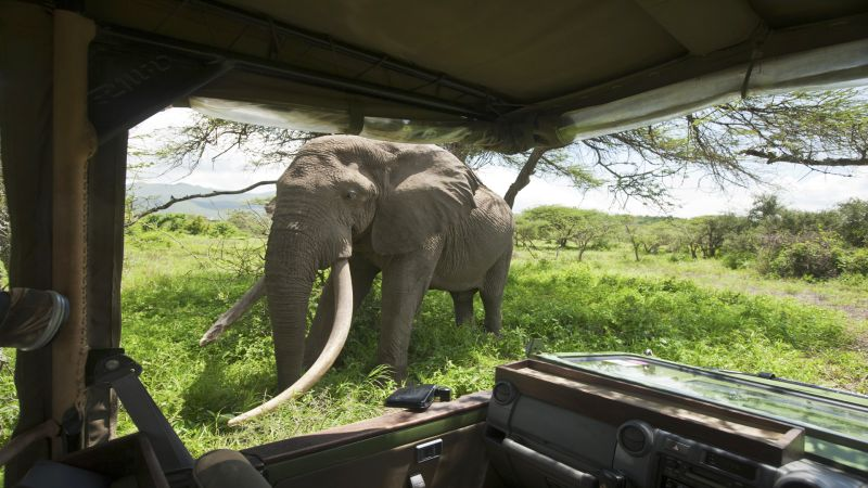 Kenya Safari: The Return of the Safari Pioneers