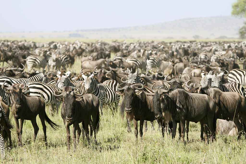 Tanzania Travel Info
