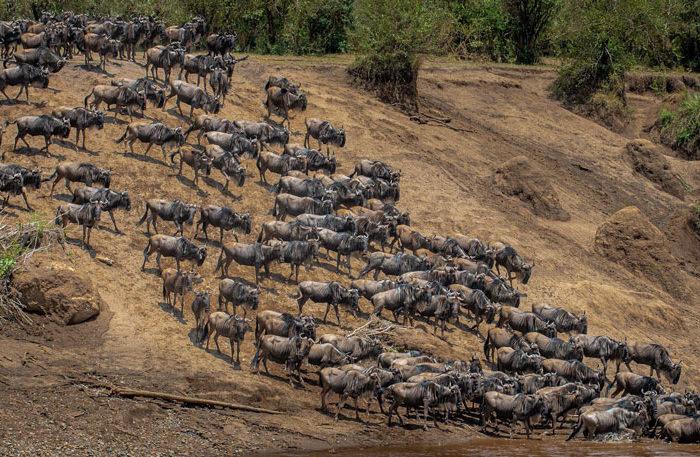 Kenya Safari Highlights – Client Feedback