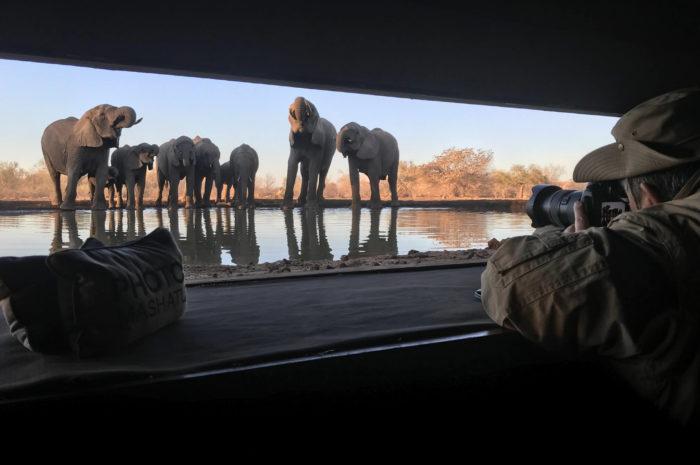 Best Safari Photographic Hides in Africa