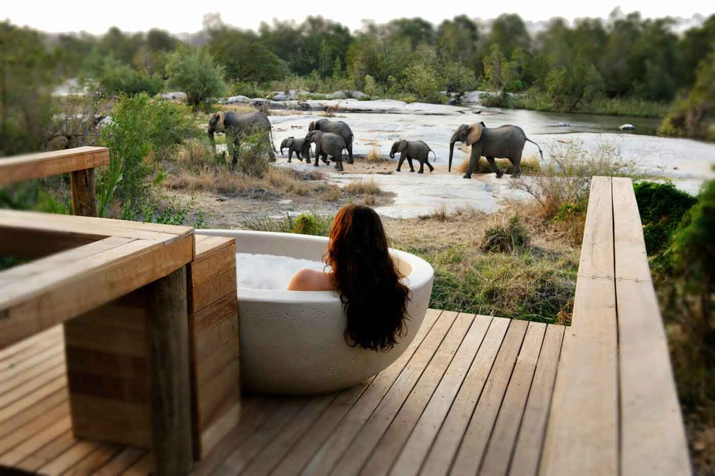 Londolozi Elephants