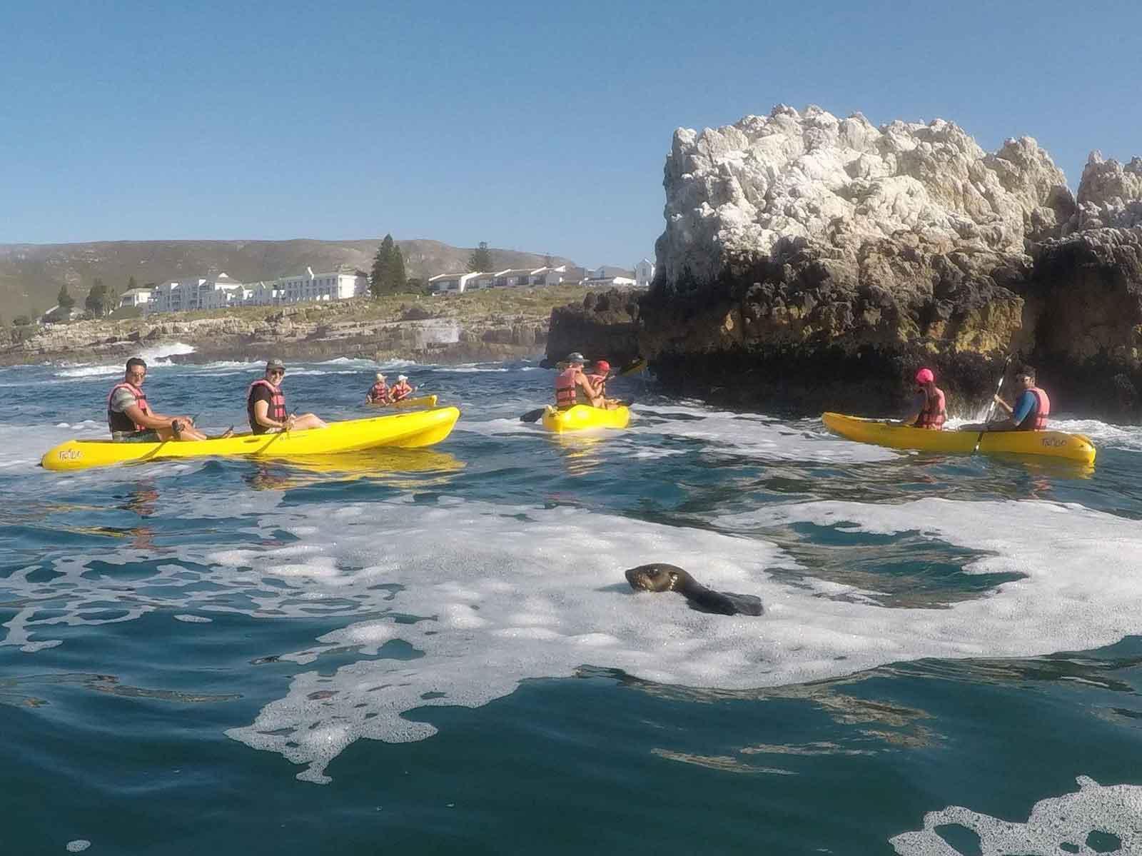 Kayak Hermanus Seals