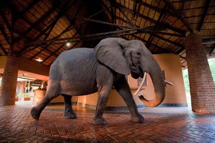 Client Feedback : South Luangwa Safari in Zambia