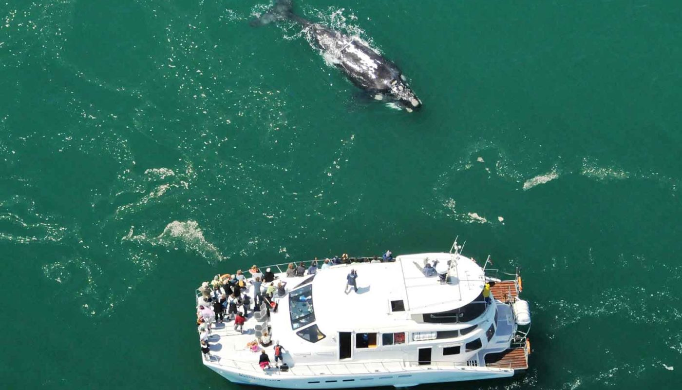 Southern Right Whale Charters