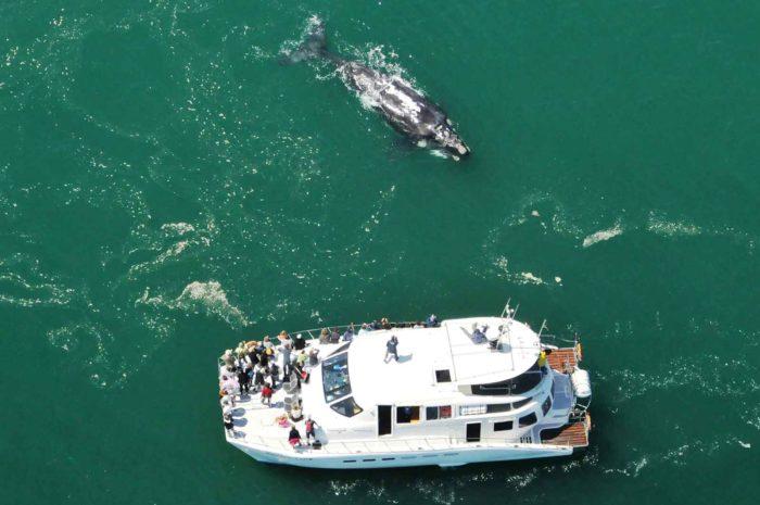 Top 3 Whale Watching Activities in Hermanus